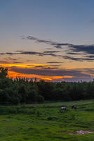 BMA Sunset over horses-1024
