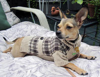 Canine Fashion for Fall