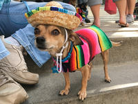 Mexican Party Dog