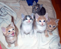 Kittens and more kittens