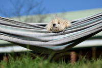 Snoozing in the hammock