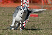Agility day [3RD PLACE]